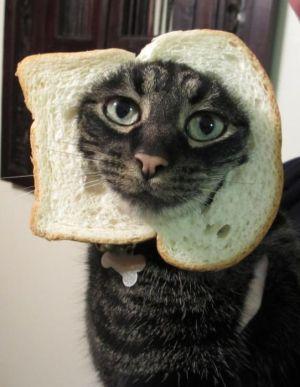 You feel like a cat walking around in bread.