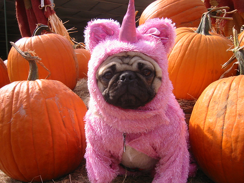 Are we all just lonely pugs dressed up as unicorns?